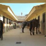 La Llar del Cavall Stables