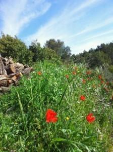 Alicante Wanderurlaub, Marnes Tal