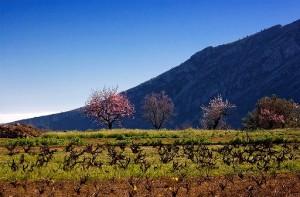 Mandelblüte Wanderwoche Spanien