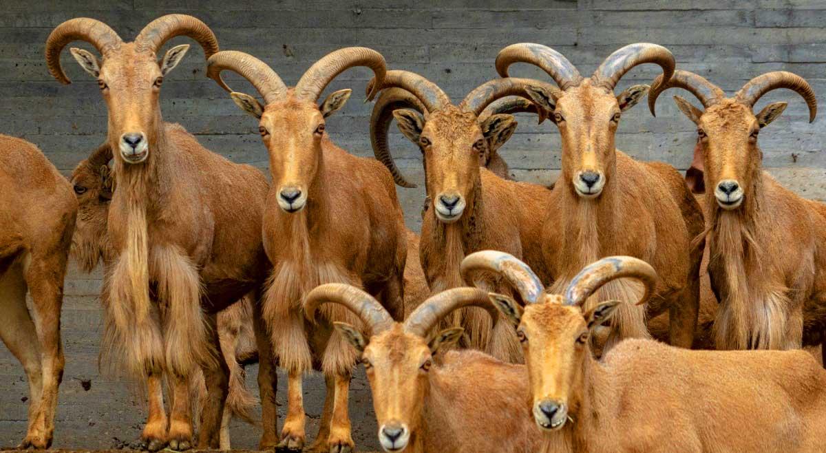 Das Mahnensch fauna an der Costa Blanca