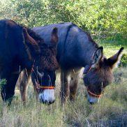 hiking holidays Spain, donkeys Refugio Marnes