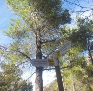 Signs Puig Campana, during hiking tours Spain