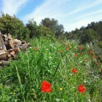 Hiking trip spain, nature on a Stroll arround Refugio Marnes