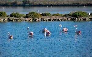 Birding site Alicante, Santa Pola Salinas