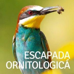 Escapasas para los que les gusta la ornitologia