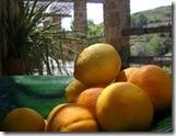 B&B Los Establos Sinasappels