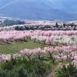 Wandelvakantie Alicante, de Jalon vallei, Lliber en Jalon