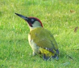 vogelvakantie spanje alicante- specht-