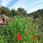 Wandel vakantie Spanje, een wandeling direct vanaf Refugio Marnes