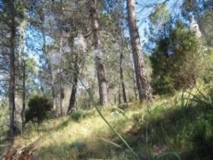 Wandel vakantie Spanje, typische vegetatie van dit deel van Spanje