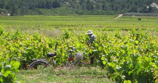 Mooie dorpen alicante, de wijnvelden rond Lliber