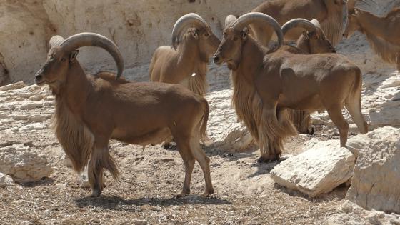 costa blanca en het binnenland manenschaap