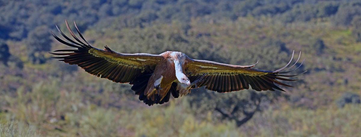 Mooie waarneming tijdens je vogelvakantie in Spanje